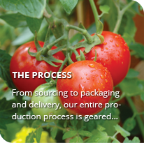 Food Processing Company | IQF Fruits | Vegetables Manufacturer